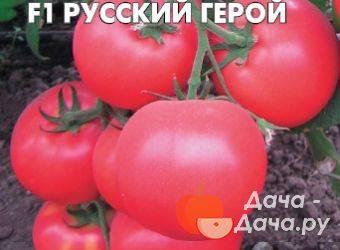 Томат русский богатырь — описание и характеристика сорта