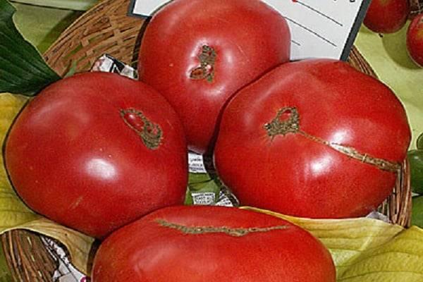 Описание сорта томата Боярыня F1, особенности выращивания и ухода