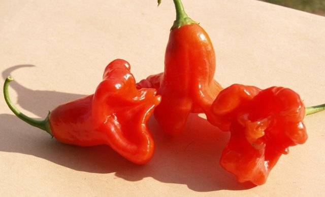 Перец «рамиро»: характеристика и описание сорта