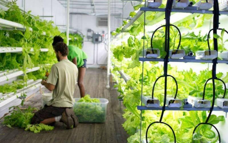 Технология выращивания огурцов на гидропонике в домашних условиях