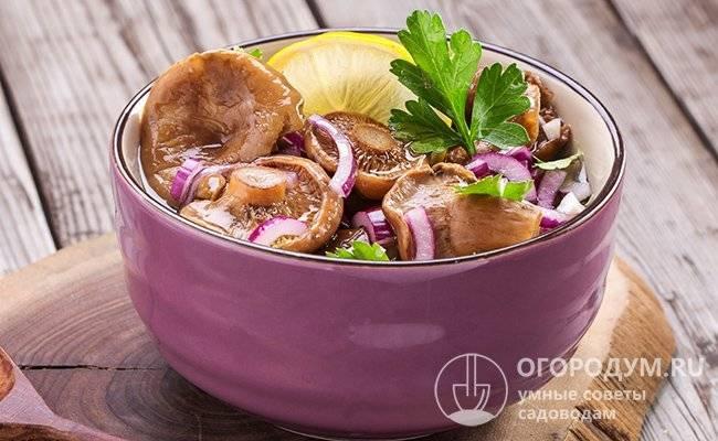 Маринование волнушек на зиму: рецепты, советы и рекомендации. грибы волнушки - рецепты приготовления на зиму, соленых, маринованных.
