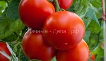 Описание томата сицилийский перчик преимущества и характеристика