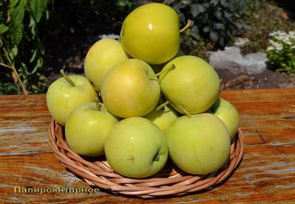 Мелкоплодная яблоня ягодная