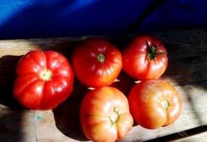 Архив метки: томат