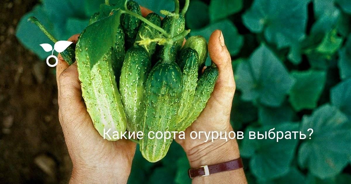 Семена огурцов для урала
