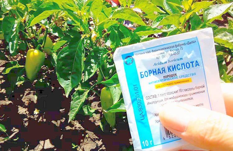 Борная кислота – использование борной подкормки для растений