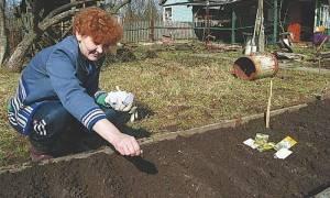 Когда сажать дурман на улице. выращивание датуры из семян в домашних условиях: фото, посадка и уход