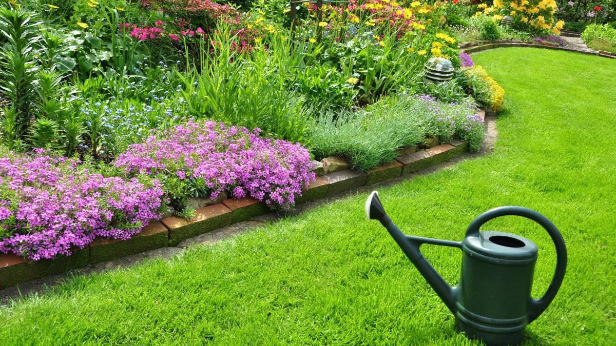 Газонная трава, которая уничтожает сорняки: простое решение для идеального сада