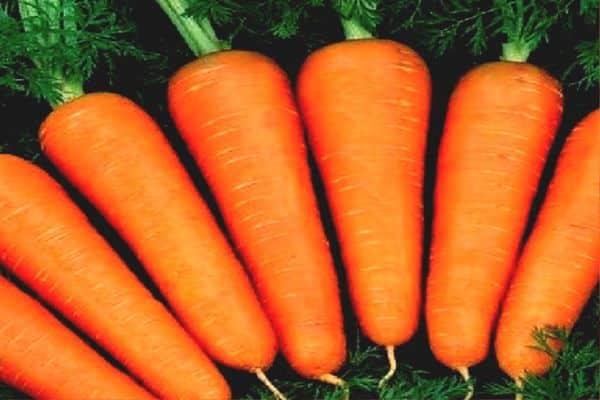 Рыжее пламя на грядках: выбираем сорта моркови для сибири