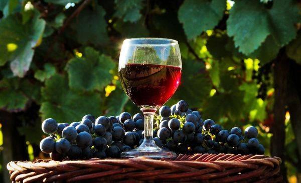 Вино из винограда в домашних условиях — самые простые пошаговые рецепты