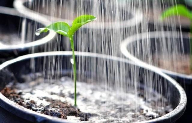 Как опрыскивать огурцы перекисью водорода: правила и сроки применения