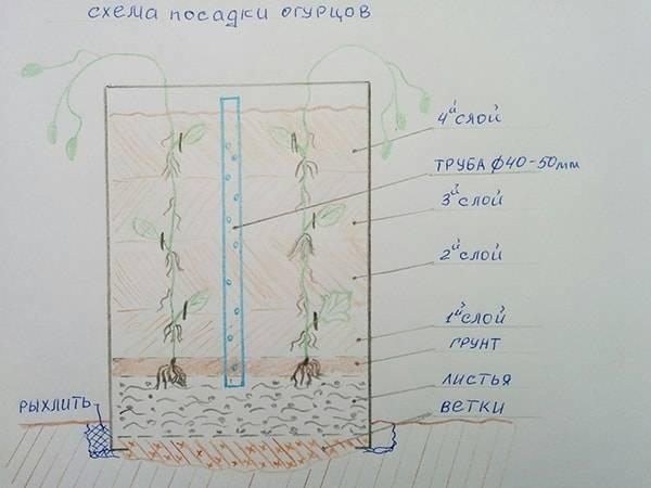 Огурцы в бочке: пошаговая технология посадки и выращивания своими руками. особенности подбора грунта и ухода (видео + 90 фото)
