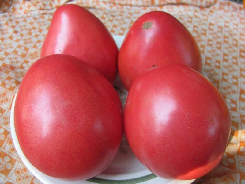 Характеристика и описание томата сенсей, выращивание сорта