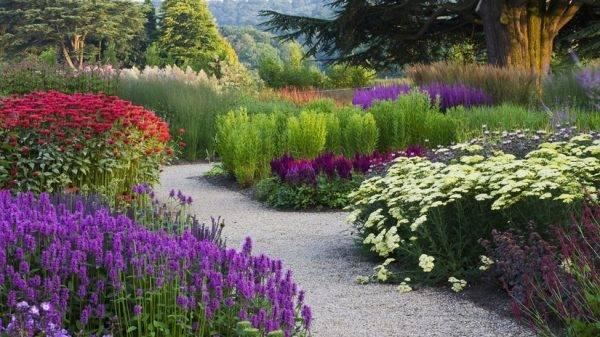 Как сочетать ирисы в ландшафтном дизайне сада с другими культурами. примеры красивого оформления клумб