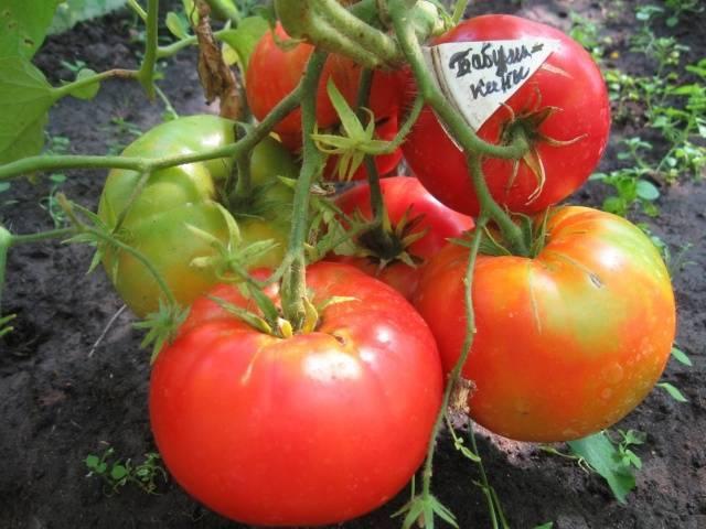 Описание сорта томата лукошко на окошке, его выращивание