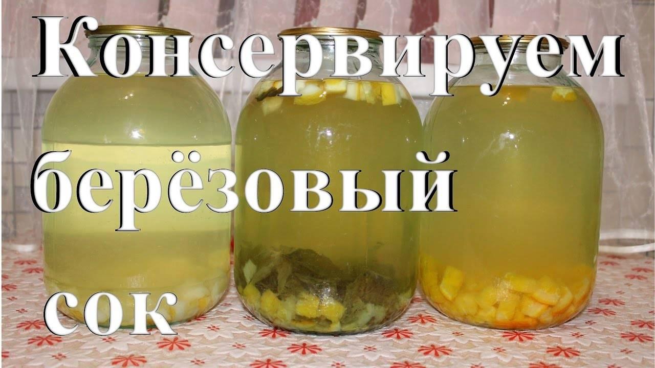 Простые рецепты консервирования березового сока в домашних условиях