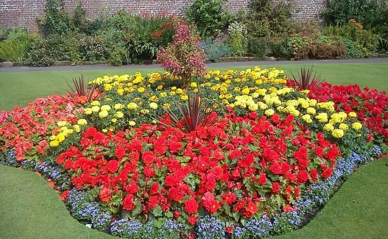 Луковичные цветы: 7 идей для посадки