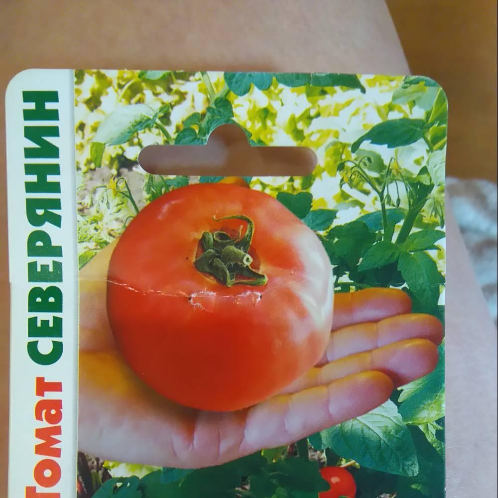 Томат северный румянец: характеристика и описание сорта с фото