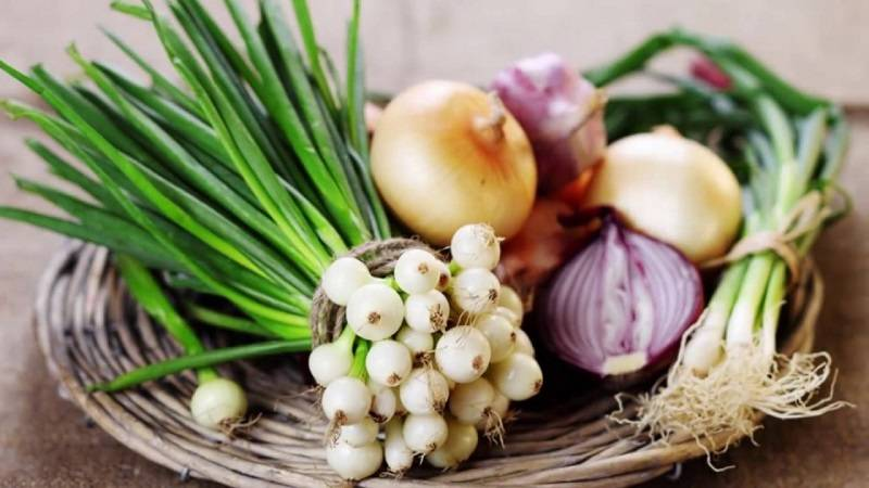 Многолетний лук на грядке: витамины и красота