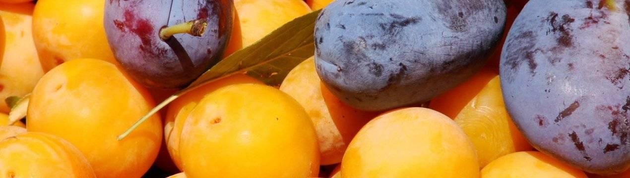 Варенье из алычи на зиму—4 вкусных рецепта