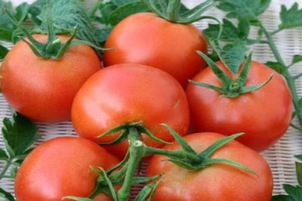 Помидор и персик в одном флаконе! описание подвидов томата: жёлтый, красный и розовый f1