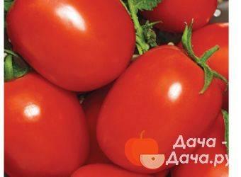 Описание и выращивание томата поцелуй герани