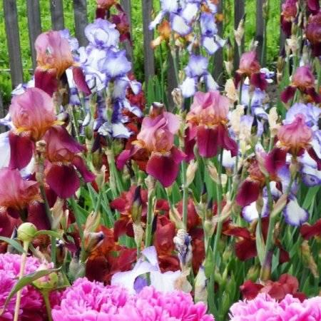 Чем подкормить лилии весной для пышного цветения в саду: удобрения, сроки и правила