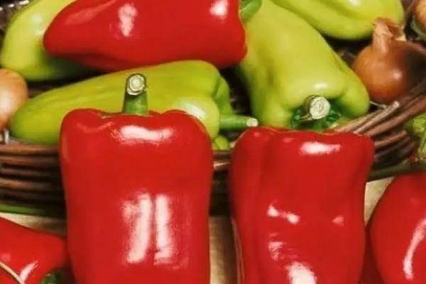 Сладкий кубовидный перец антей — описание, фото, характеристики, выращивание сорта