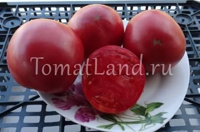 Описание сорта томата Сибирское яблоко, характеристика и урожайность