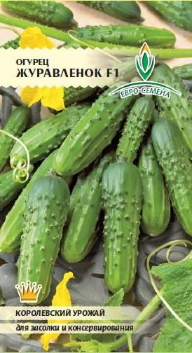 Высокоурожайный огурец журавленок f1 — описание гибрида, секреты выращивания, отзывы