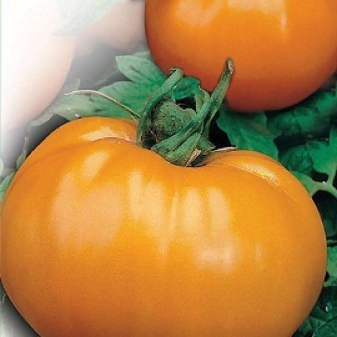 Томат персик: 5 разновидностей и 7 особенностей сорта