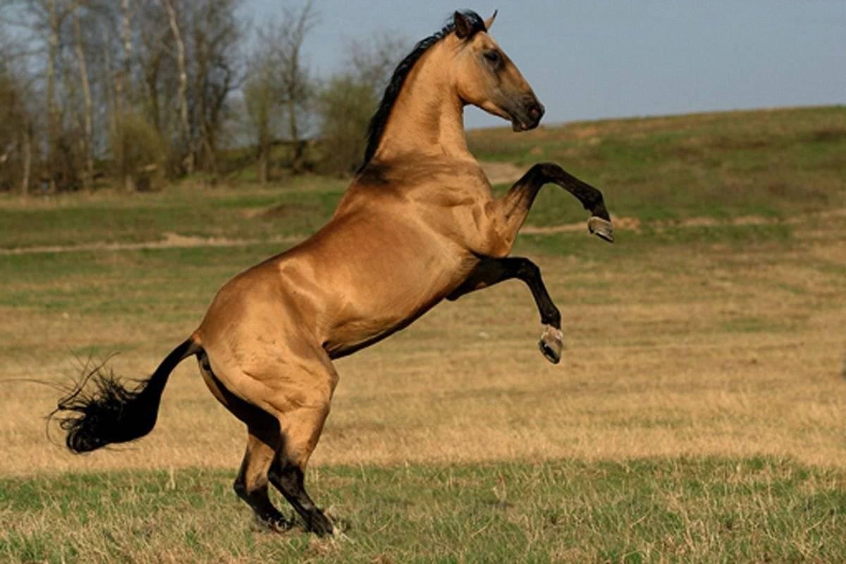 Сколько живут лошади: средние показатели в домашних условиях и таблица