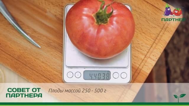 Особенности сорта томата «третьяковский f1» и правильный уход за ним