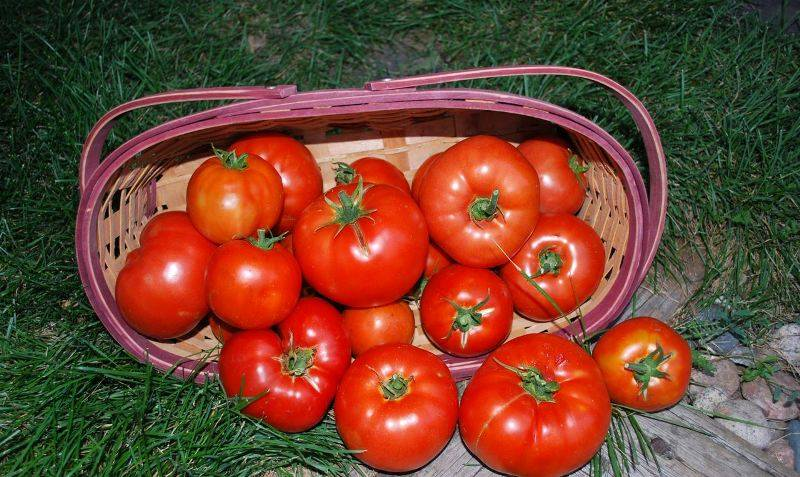 Что такое биф томаты: особенности, описание сортов