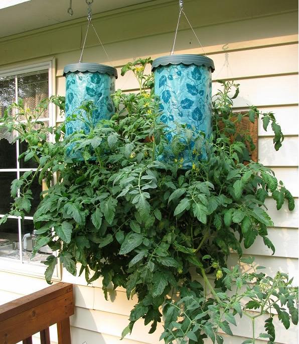 составы томаты вверх ногами картинки последние несколько лет