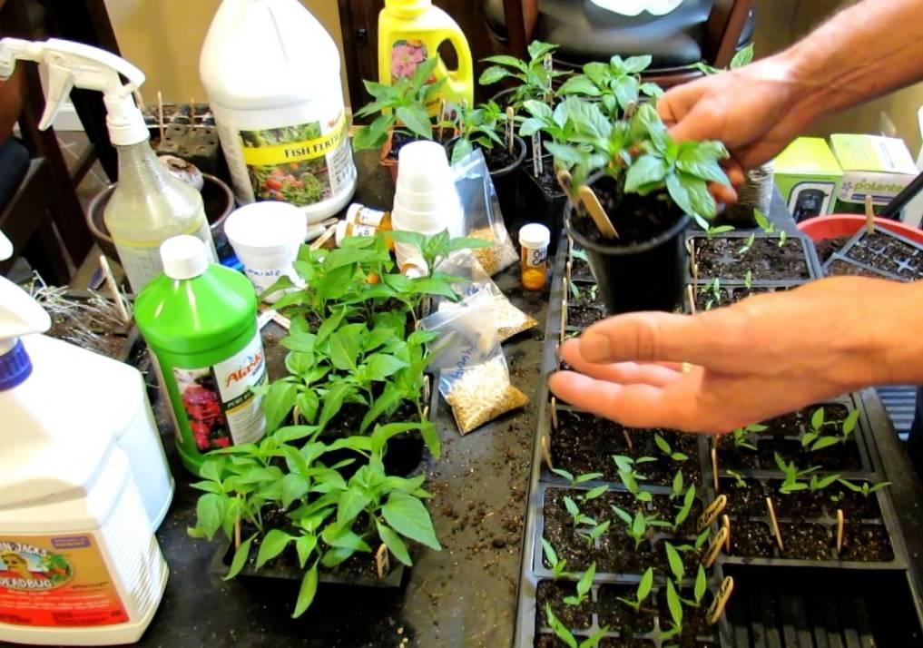 Удобрение растений йодом: правила подкормки
