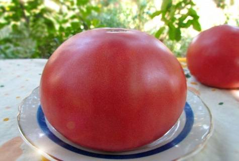 Сорта низкорослых томатов для выращивания в открытом грунте