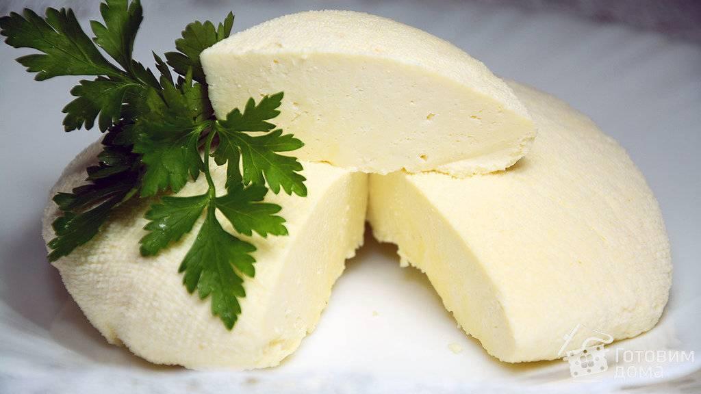 Польза кефира из козьего молока и рецепт приготовления в домашних условиях
