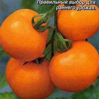 Характеристика и описание томата «царевна»