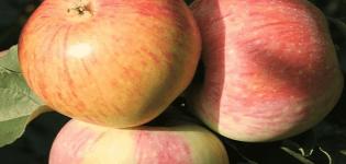 Характеристика и описание сорта томата Хайпил 108 f1, урожайность