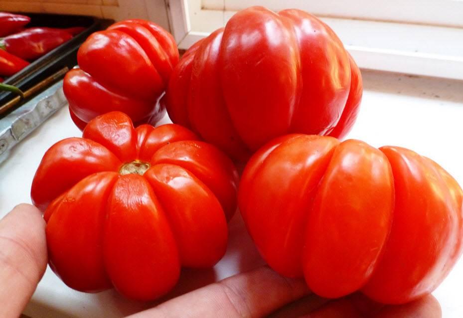 Характеристика и описание сорта томата Сто пудов, его урожайность