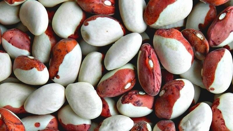 Чёрная фасоль: распространённые сорта и агротехника культуры