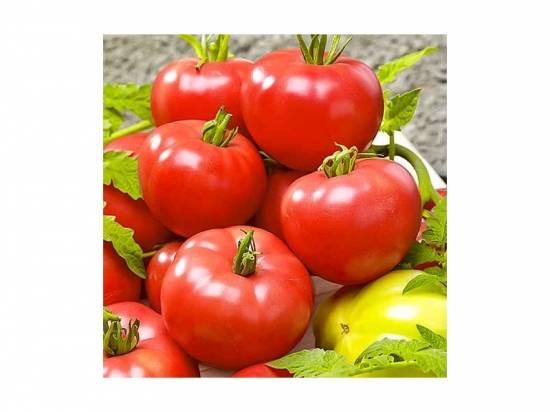 Томат «клубничное дерево» — самостоятельный высокоурожайный сорт