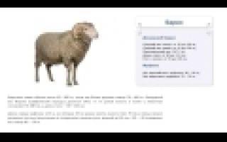 Сколько весит баран: средний вес животных различных пород