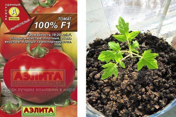 12 сортов очень сладких томатов – рекомендуют коллекционеры