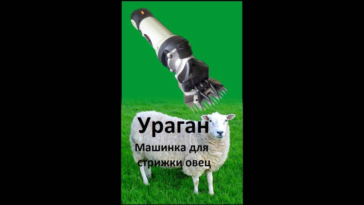 Использование специальной машинки для стрижек овец, основные преимущества и выбор качественной модели