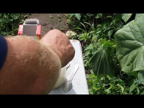 Сосудистое (трахеомикозное) увядание, фузариоз и вертициллез. листья желтеют, вянут, обвисают, сохнут, становятся водянистыми.  признаки, симптомы, лечение, профилактика