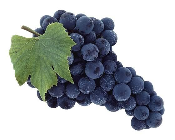 11 лучших сортов винограда, которые помогут вам создать неповторимое домашнее вино