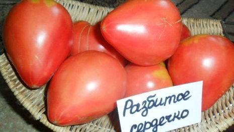 Томат «банан красный», описание сорта и характеристика урожайности помидора (фото)