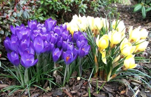 Неприхотливые и долгоцветущие многолетние садовые цветы